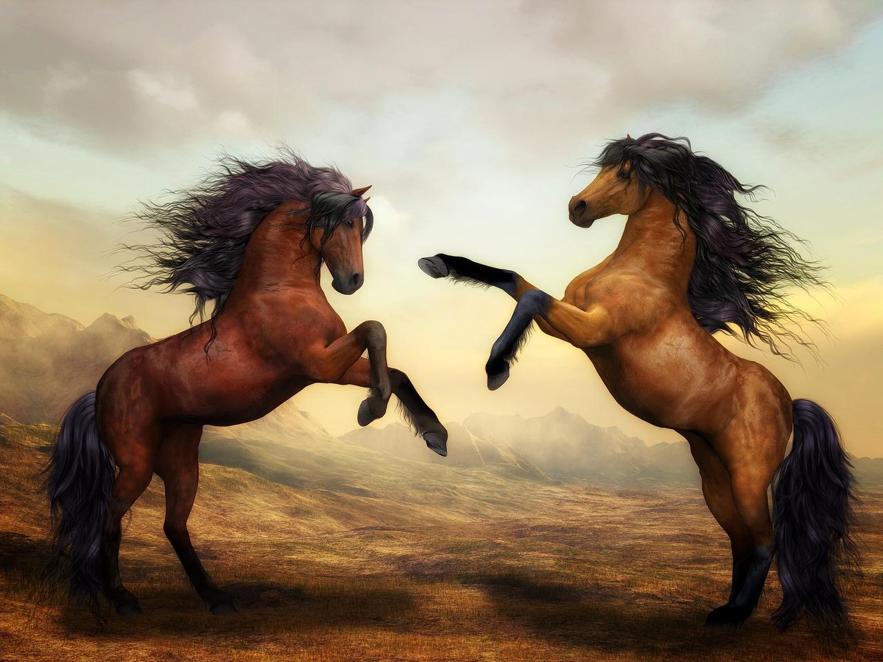 זוג סוסים
